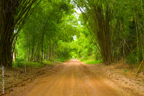 chodnik-bambusowy
