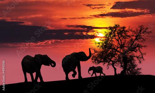 Staande foto Afrika Elephant family at sunset