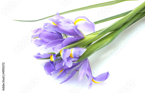 Spoed Foto op Canvas Iris Beautiful bright irises isolated on white