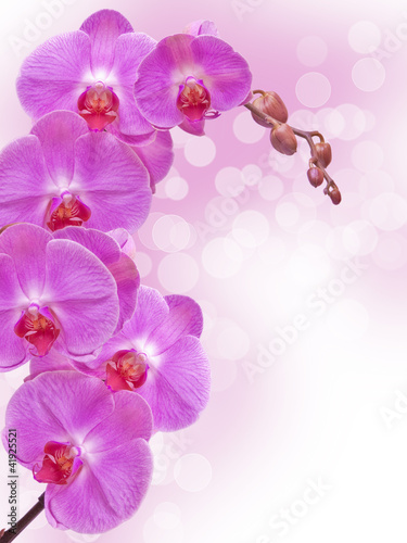 Naklejki o różnych zastosowaniach zamyka-up-storczykowy-kwiat