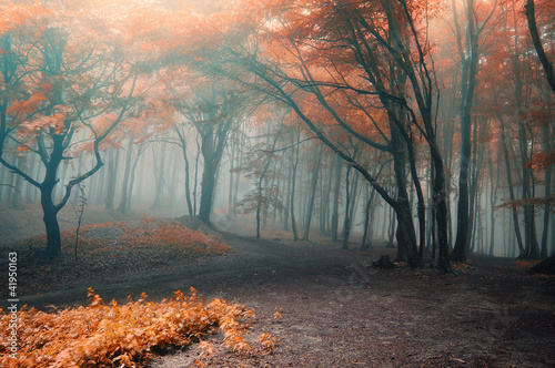 Fototapeten Wald trees with red leafs in a forest with fog