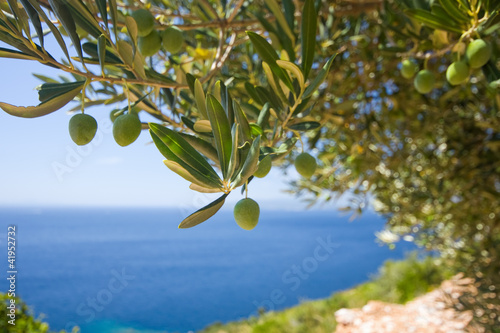 Keuken foto achterwand Olijfboom a olive tree on the sea background