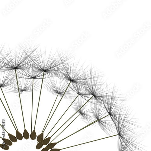Poster Pool dandelion
