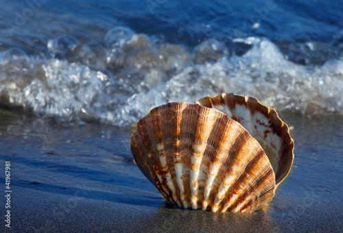 Foto-Leinwand - Meer und Sandstrand mit Muschel (von Gina Sanders)