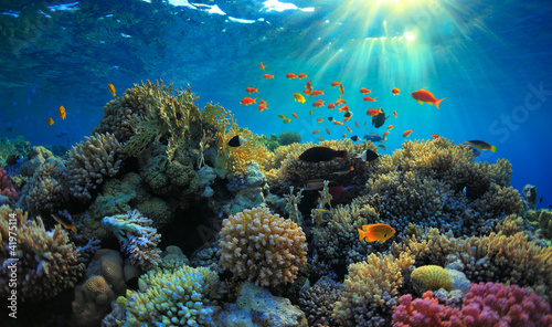 Photo Stands Coral reefs Underwater view