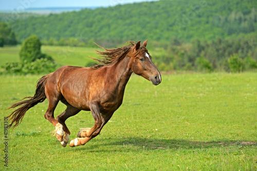 Horse Fototapet
