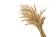 Bundle Of The Gold Wheat Ears