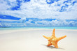 A starfish on a beach, cloudy sky and turquoise sea at Kuredu is
