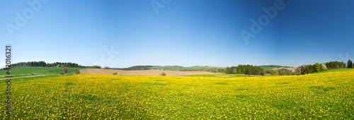 Staande foto Weide, Moeras Spring