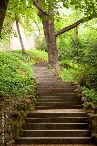 Fototapeta premium schody w parku