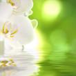 orquídea sobre el agua