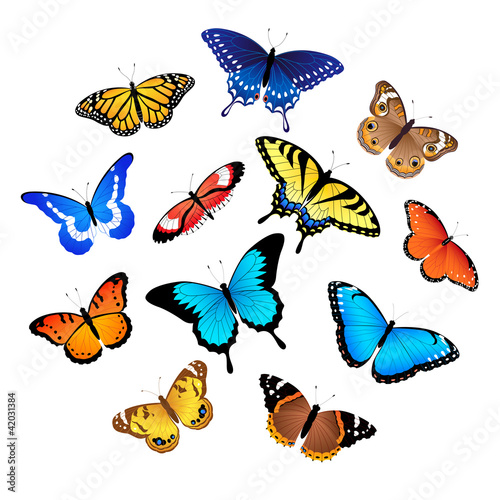 Door stickers Butterflies Collection of butterflies