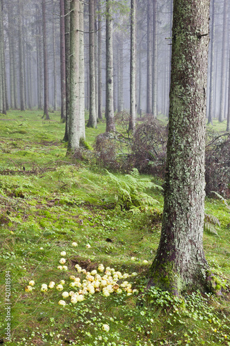 Foto auf Acrylglas Wald im Nebel Laid out apples in the woods