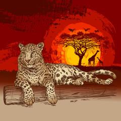 Fototapeta Zwierzęta Leopard at sunset