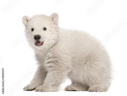 Deurstickers Ijsbeer Polar bear cub, Ursus maritimus, 3 months old, standing