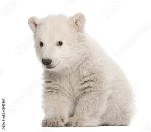 Deurstickers Ijsbeer Polar bear cub, Ursus maritimus, 3 months old, sitting