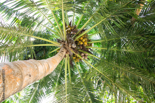Foto-Kissen - Kokosnusspalme (von magele-picture)