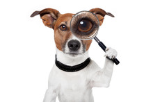 Searching Dog With Magnifying ...