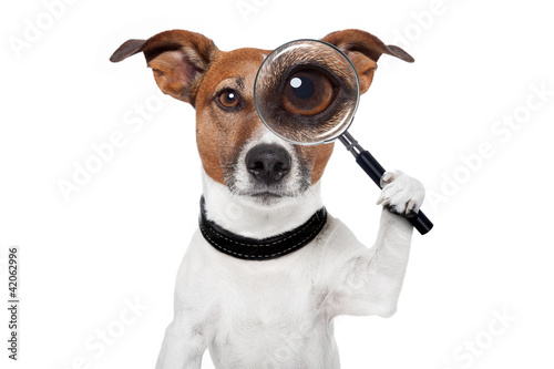 Fotografía  searching dog with magnifying glass