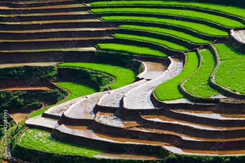 Plissee mit Motiv - Rice fields in Vietnam