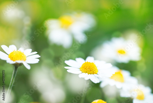 Recess Fitting Panorama Photos Abstract summer backgrounds with daisy flowers