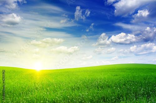 Foto op Plexiglas Platteland green field