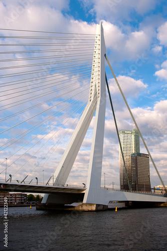 Foto auf Acrylglas Schwan the bridge called ´erasmus` in Rotterdam, the Netherlands
