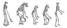 The Comparison Of Greatest Ape...