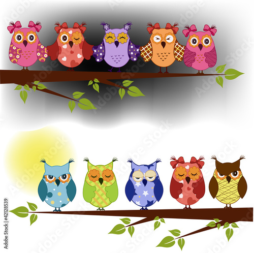 Poster Hibou Family of owls sat on a tree branch at night and day