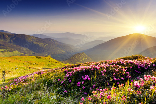 Foto op Canvas Lavendel mountain landscape