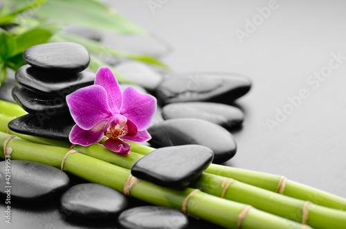 Foto op Canvas Zen orchid