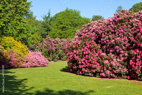 Foto-Duschvorhang - Rhododendron and Azalea Bushes in Beautiful Summer Garden