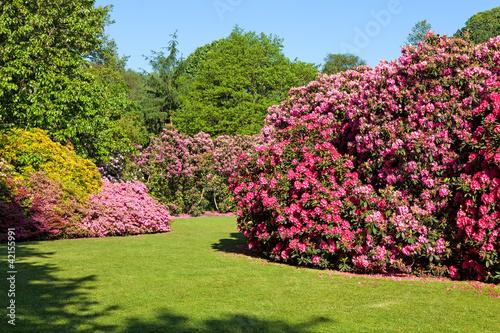 Foto-Schiebegardine ohne Schienensystem - Rhododendron and Azalea Bushes in Beautiful Summer Garden