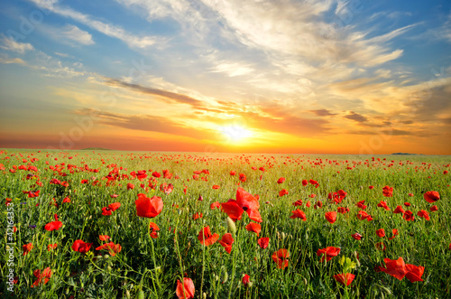 Spoed Foto op Canvas Poppy field with poppies
