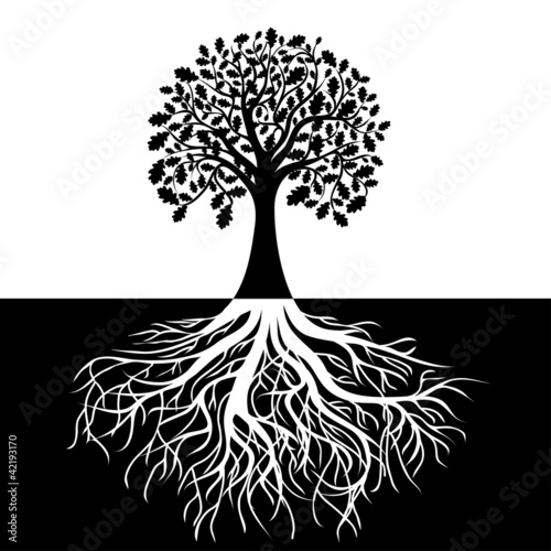 Fotografia  Tree with Roots on Black and white Background