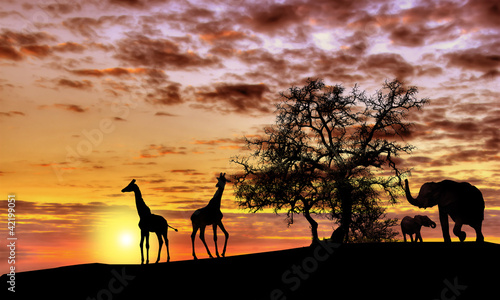 African sunset - 42199051