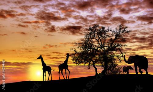 African sunset - 42199051