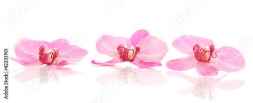piekni-orchidea-kwiaty-odizolowywajacy-na-bielu