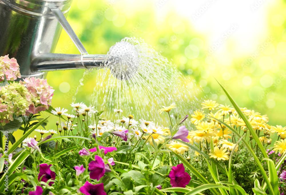 Fototapety, obrazy: Gardening