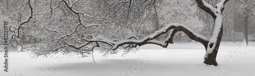 Photo During snow storm in Central Park, New York city