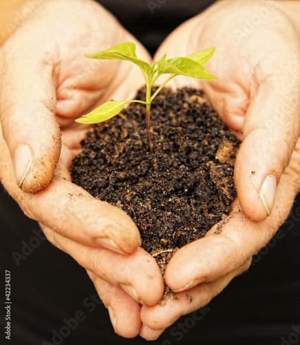 Garden Poster Plant Hands holding sapling in soil on black