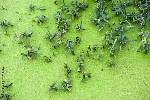 Photo  Algae