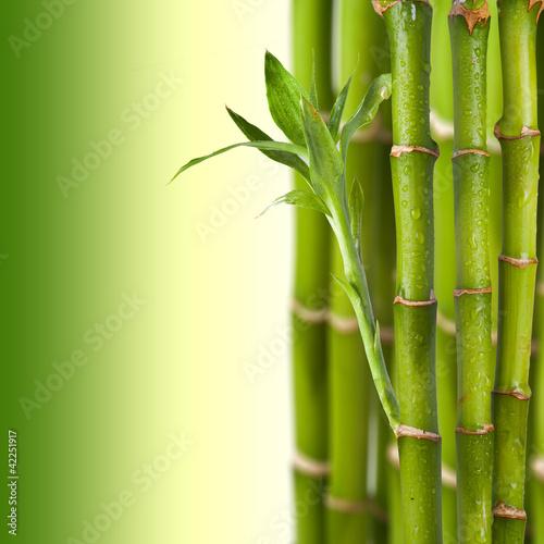 swiezy-bambus-na-zielonym-tle