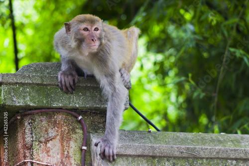 Fényképezés  Monkey on a Ledge