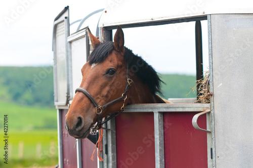Fototapeta Horsebox obraz