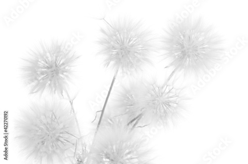 Foto op Aluminium Paardenbloem Dandelions