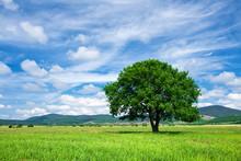 Beautiful Green Tree On Green Meadow