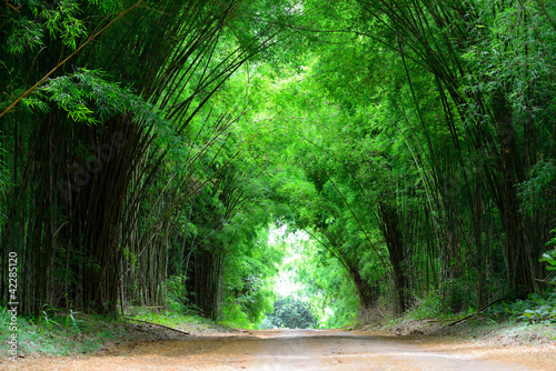 Tuinposter Bamboe The high bamboo cover the clay road