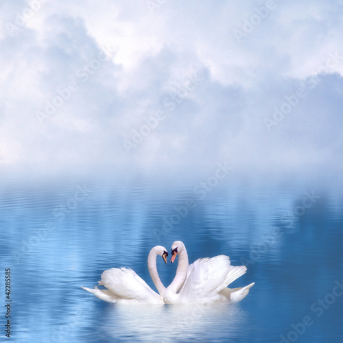 Fotografie, Obraz Graceful swans in love