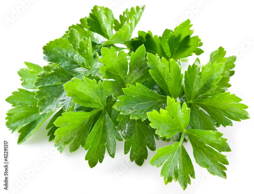 Fototapeta Bunch of green coriander obraz